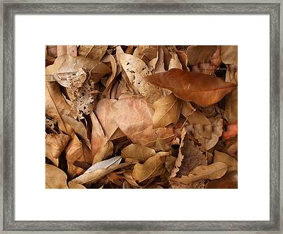 Family Of Leaves Framed Print by Janet  Telander