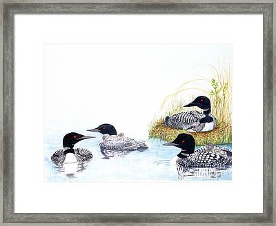 Family Of Loons Framed Print by Pauline Ross