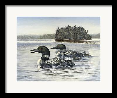 Loon Framed Prints