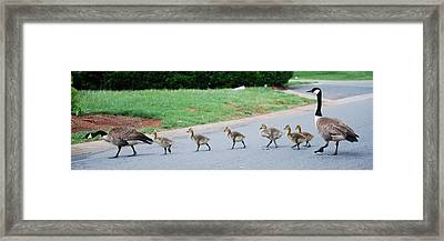 Family Outing Framed Print by Trudi Southerland