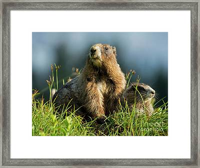 Family Portrait Framed Print by Mike Dawson