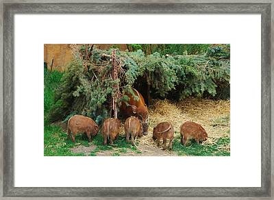 Family Framed Print by Sergey  Nassyrov