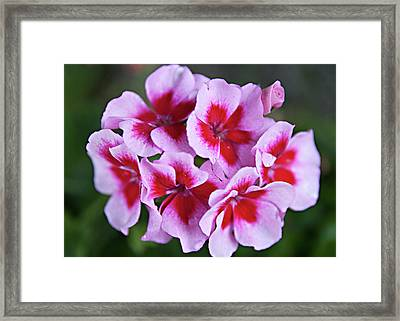 Framed Print featuring the photograph Family by Sherry Hallemeier