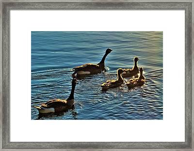 Family Swim Framed Print