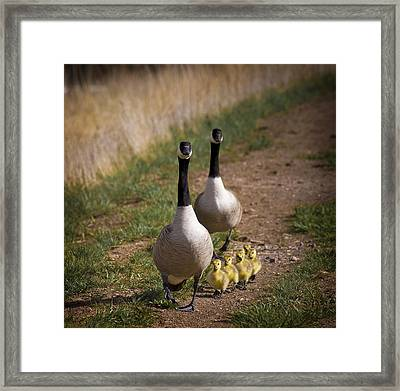 Family Time 2 Framed Print by Marilyn Hunt