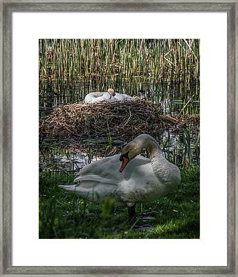 Framed Print featuring the photograph Family Time by Odd Jeppesen