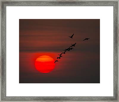 Family Vacation Framed Print by Tony Beck