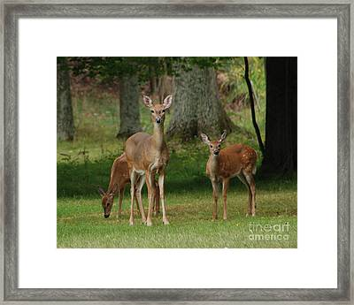 Family Walk Framed Print