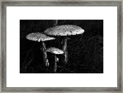 Framed Print featuring the photograph Family by Wanda Brandon