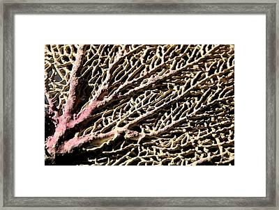 Fan Coral Framed Print by Mary Haber