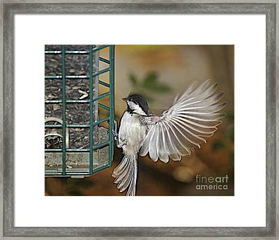 Fan Dance Framed Print by Faith Harron Boudreau