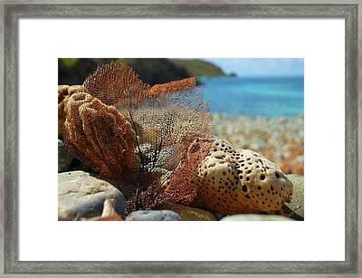 Fan Sponge And Coral Framed Print