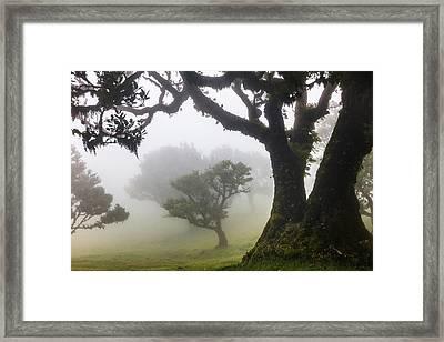 Fanal Framed Print