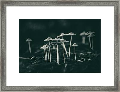 Fanciful Fungus Framed Print