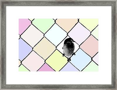 Fancy Colors Framed Print