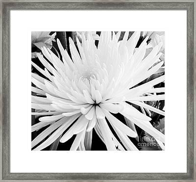 Fancy Flower Framed Print
