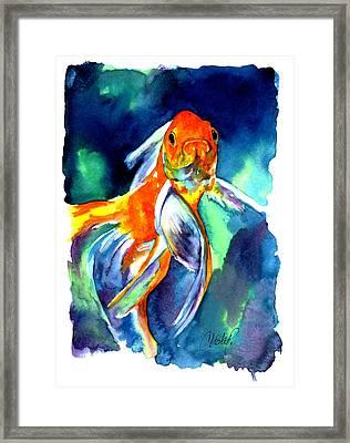 Fancy Goldfish Framed Print