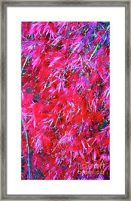 Framed Print featuring the photograph Fancy Pants by Roberta Byram