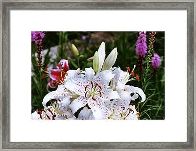 Fancy White Lily In Garden Framed Print