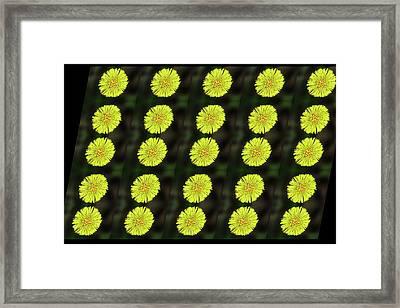 Fantasia On A Yellow Flower Framed Print