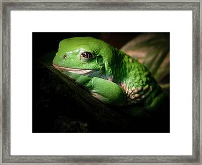 Fantastic Green Frog Framed Print by Jean Noren