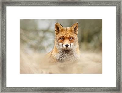 Fantastic Mr Fox Framed Print by Roeselien Raimond