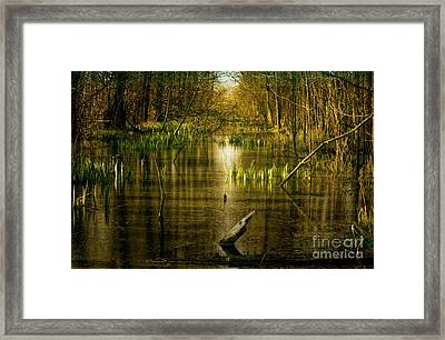 Fantasy Forest Landscape With Water Framed Print by Tanja Riedel