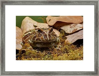 Fantasy - Horned Frog Framed Print by Nikolyn McDonald