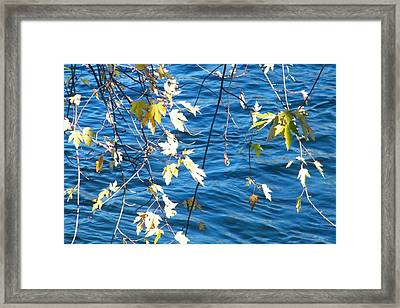 Farewell Autumn      Indiana Framed Print