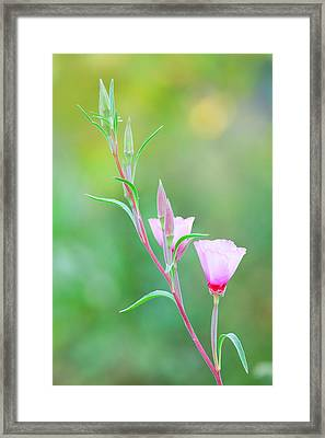 Framed Print featuring the photograph Farewell To Spring by Ram Vasudev