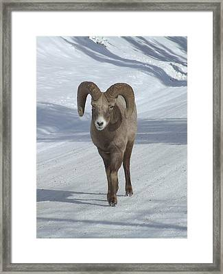 Farewell To The King Framed Print by Tiffany Vest