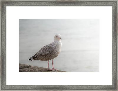 Farewell Framed Print by Wim Lanclus