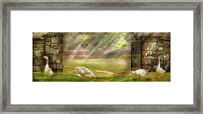 Farm - Geese -  Birds Of A Feather - Panorama Framed Print by Mike Savad