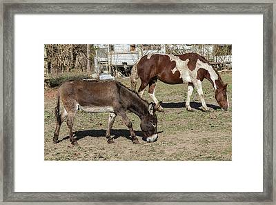 Farm Animals Framed Print