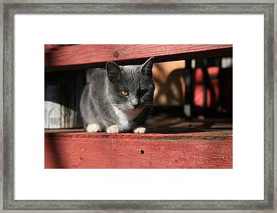Farm Cat Framed Print by Tacey Hawkins