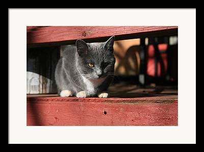 Porch Framed Prints