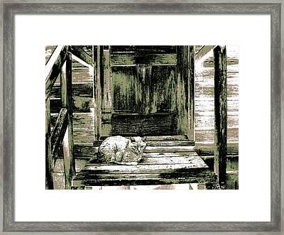 Farm Cat Framed Print by Will Borden