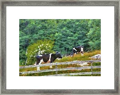 Farm - Cow - Moo  Framed Print