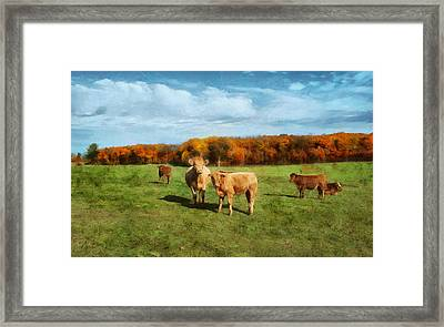 Farm Field And Brown Cows Framed Print
