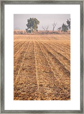 Farm Field Fog Framed Print by Steve Gadomski
