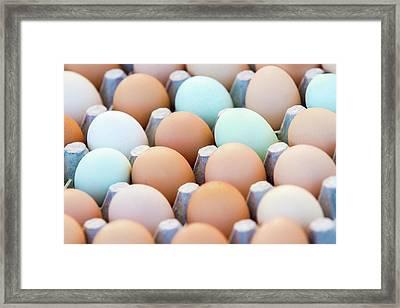 Farm Fresh Eggs Framed Print by Todd Klassy