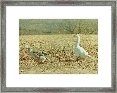 Farm Geese Framed Print by JAMART Photography