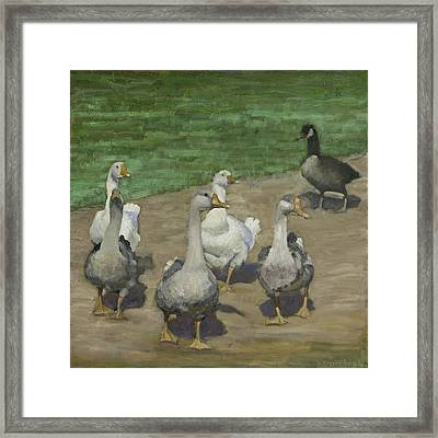 Farm Geese Framed Print by John Reynolds