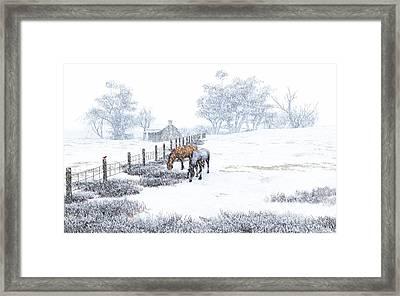 Farm Horses In The Snow Framed Print