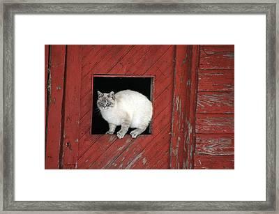 Farm Kittie Framed Print by Shawna Dockery