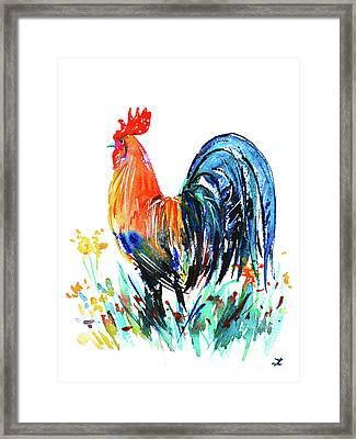 Farm Rooster Framed Print by Zaira Dzhaubaeva