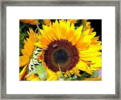 Farm Stand Sunflowers #3 Framed Print