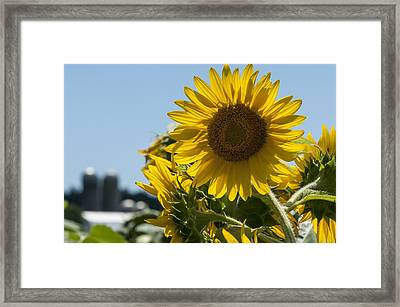 Farm Sunshine Framed Print