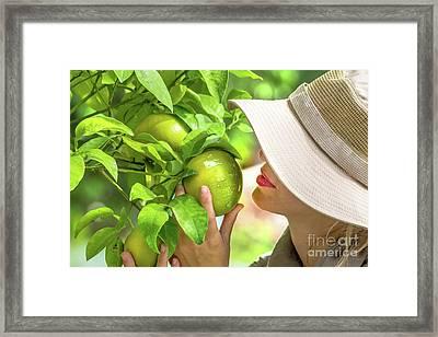 Farmer Checking Lemons Framed Print