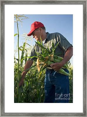 Farmer With Corn Framed Print